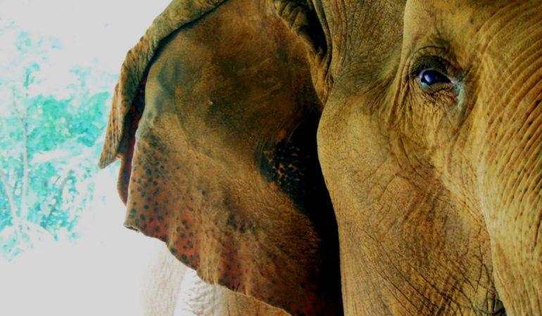 Tailandia: visita a un santuario de elefantes
