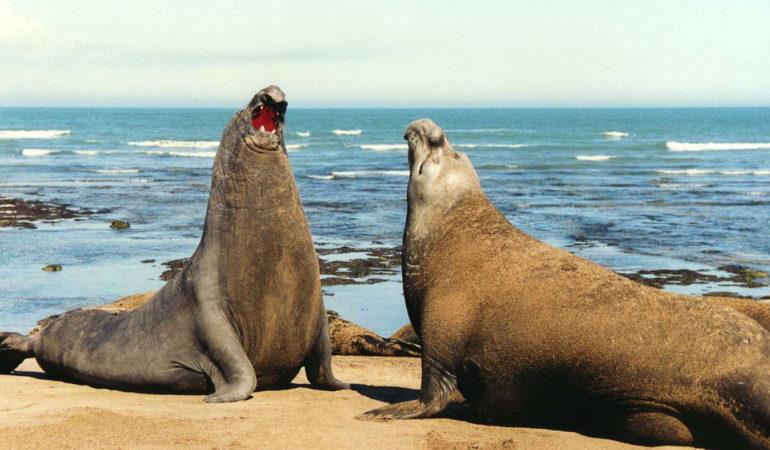 Península Valdés: 5 rincones donde encontrarte con la naturaleza
