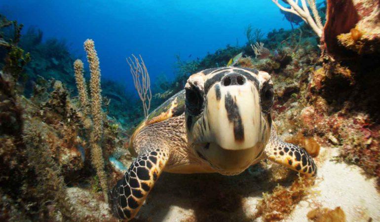 6 razones para visitar Riviera Maya