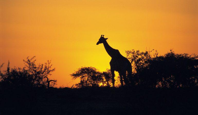 Sudáfrica: razones que lo convierten en un destino imperdible