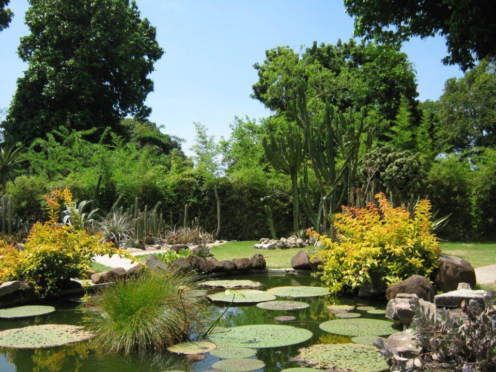 jardín botánico rio de janeiro