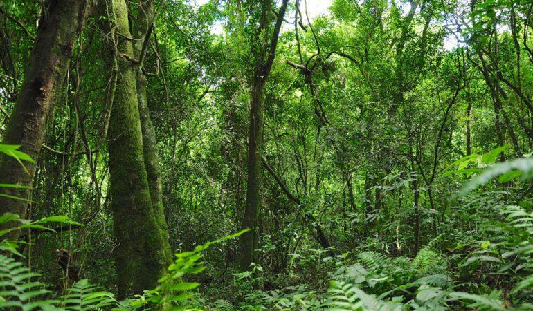 Yryapu, turismo guaraní en Misiones