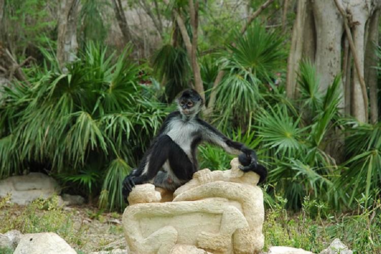 isla de monos xcaret mexico