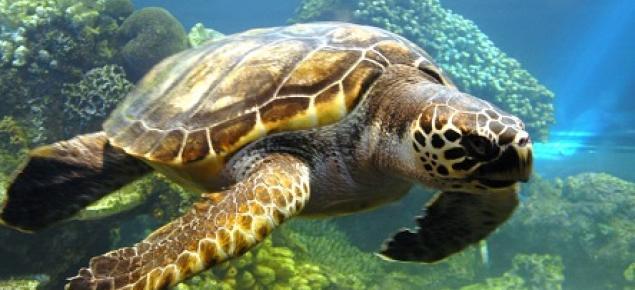 tortugas marinas xcaret mexico