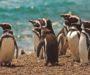 ¡Temporada de Pingüinos en Punta Tombo, Chubut!