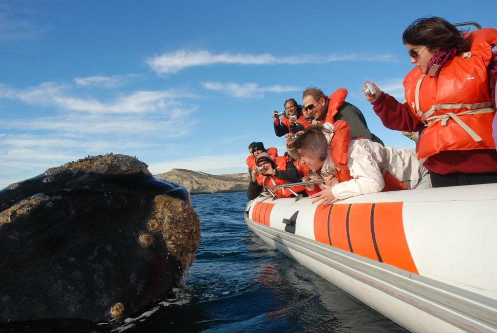 península valdés ballenas